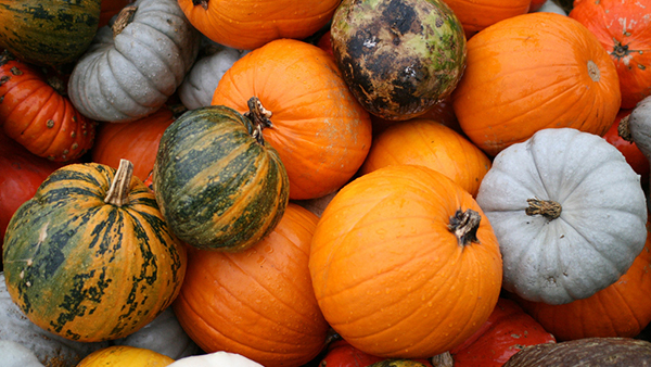 9 Classical Works to Spice Up National Pumpkin Day