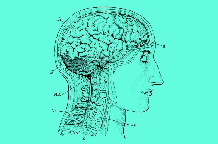 brain_full