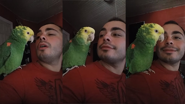 """This Amazon Parrot Singing """"'O Sole Mio"""" Along With Pavarotti Is All of Us When We Try to Sing Opera"""