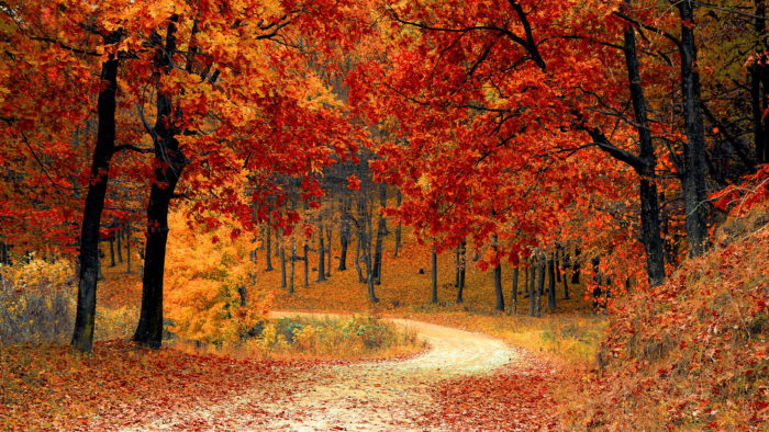 Playlist: 15 Classical Works to Help You Fall into Fall