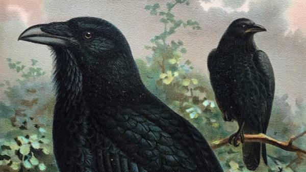 Edgar Allan Poe, Leonard Slatkin, Vincent Price Team Up for an Orchestral Take on 'The Raven'