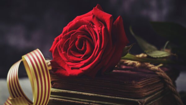 """A rose for love and a book forever"" — Literature for Music Lovers on World Book Day"