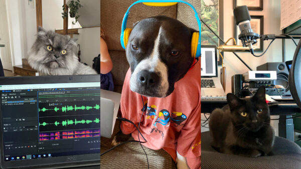 Now Introducing: The Pets of WFMT